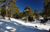 Troodos mountains; January/February