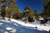 Troodos mountains; January/February